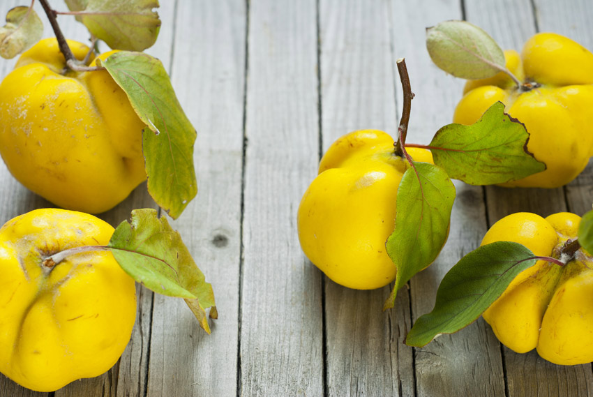 quince fruits