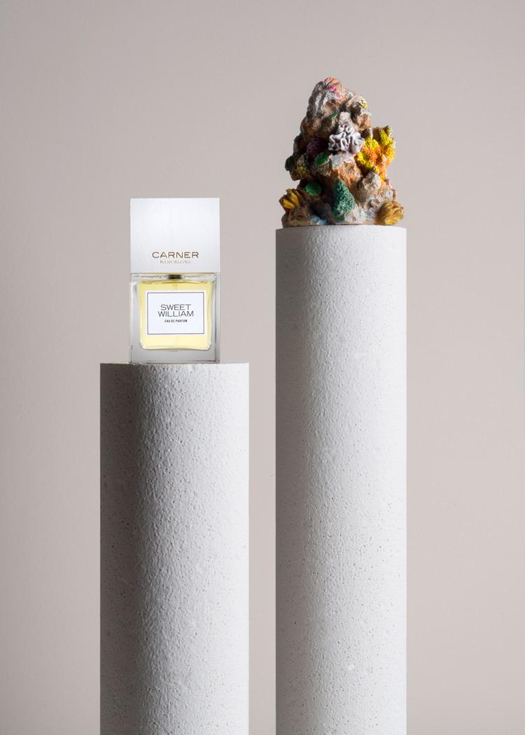 summer fragrances sweet william by carner