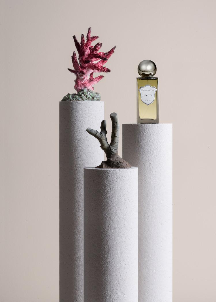 cacti by regime des fleurs