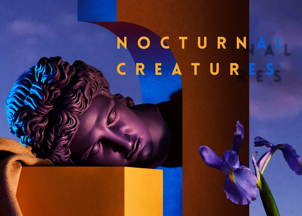 nocturnal creatures