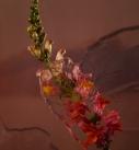 floral set design